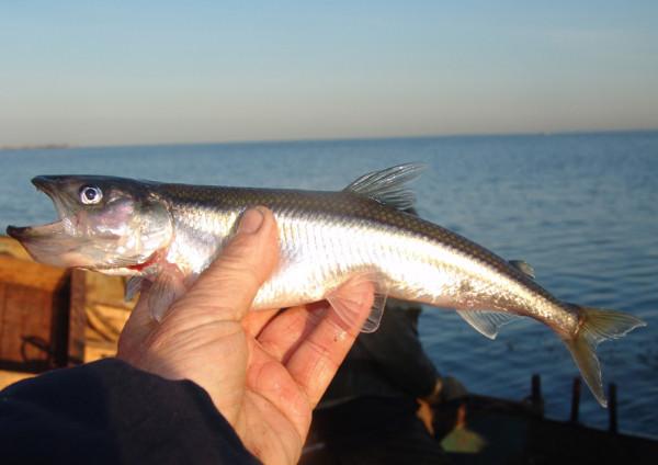 прогноз клева рыбы в дивногорске