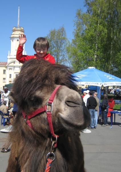 на верблюде А6нет