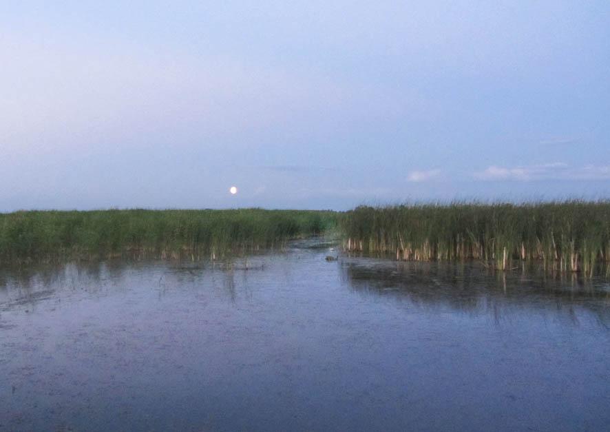 луна в болоте А6нет