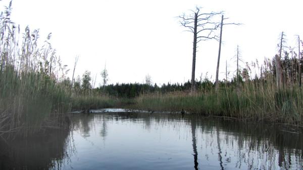 49 протока в болоте А6нет