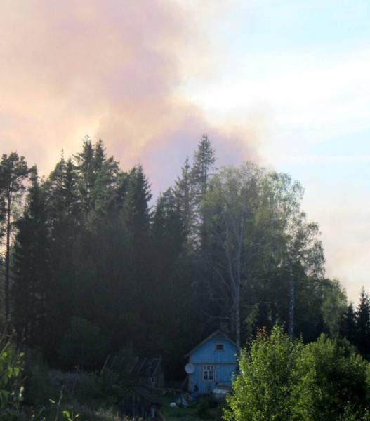 2 лес горит