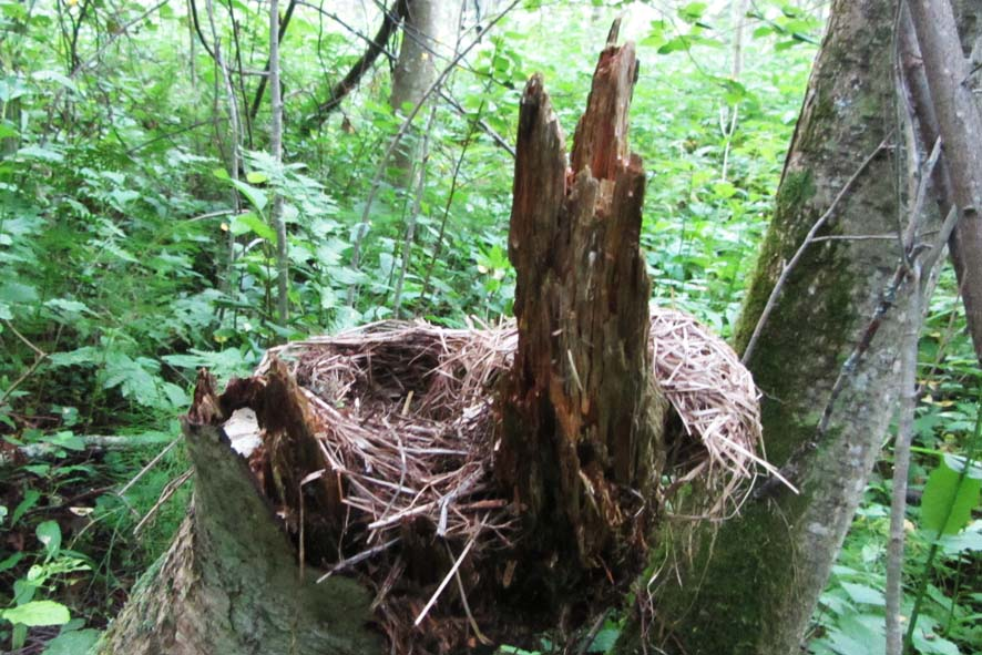 гнездо А6нет