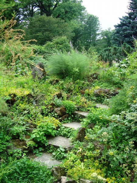 Ботанический сад 059