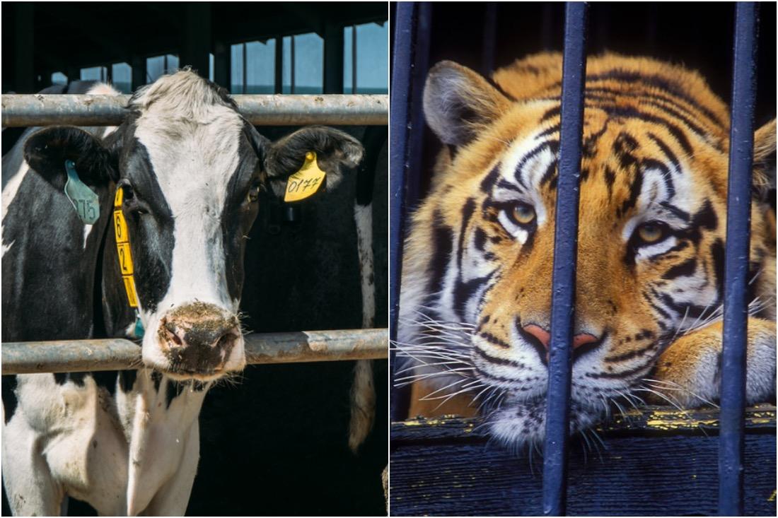 Когда зоозащитники -- лицемеры