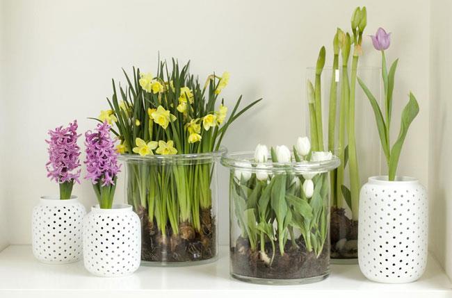 Модные акценты из моих любимых прозрачных цветочных ваз - Блог о цветах