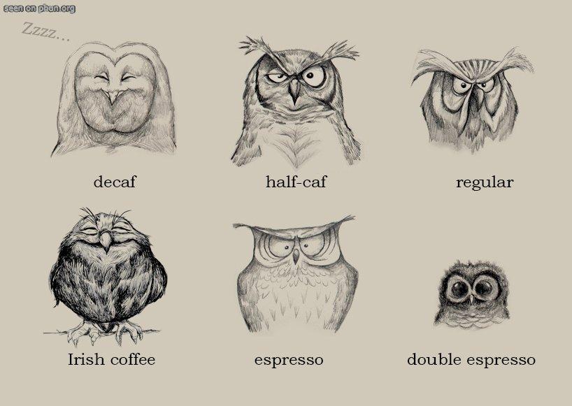 кофейные-совы