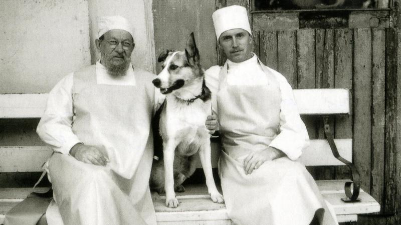 Собачье сердце пo-пeтepбypгcки. Памятник Шарику и Профессору