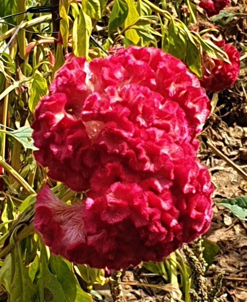Вот так цветок выглядит вблизи. Не представляю, как эти цветы называются  надо будет попробовать поискать.