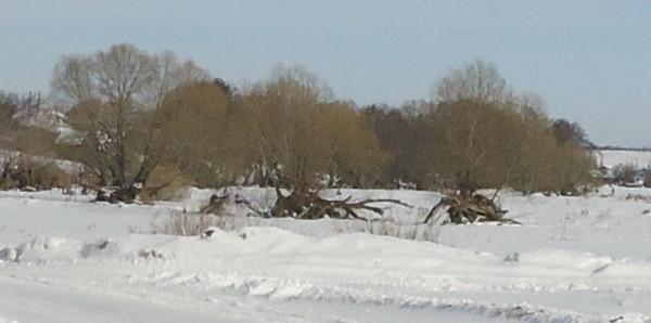 Аненск, деревья, вырваные с корнем