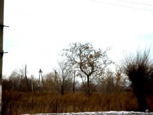поселок Роза дерево.jpg