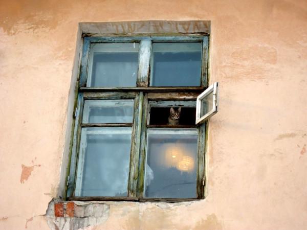 поселок Роза котик.jpg