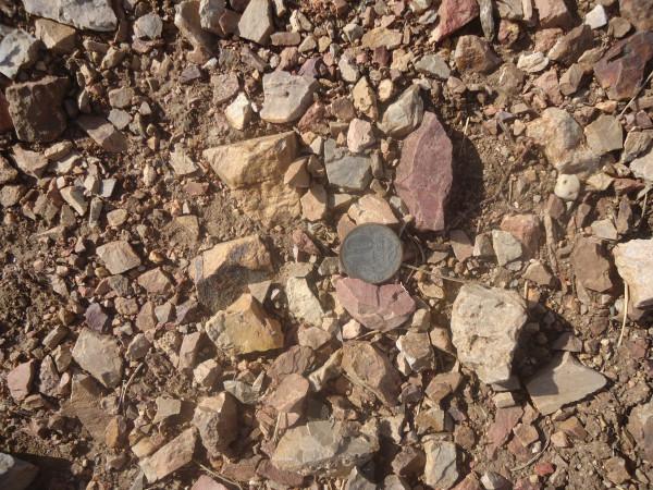 монетка в степи