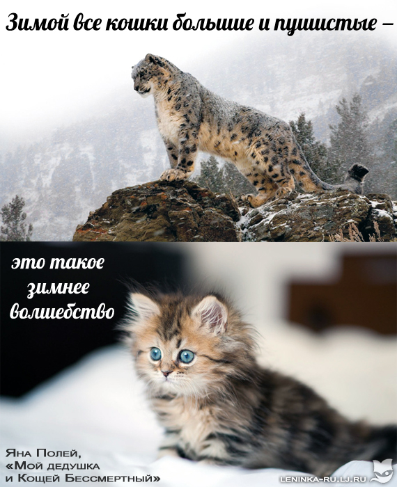 Полей.jpg