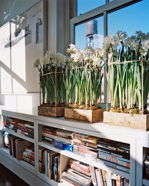 Bookcase+Flowers+Wooden+boxes+filled+flowering+9On3XTQ0ss4l