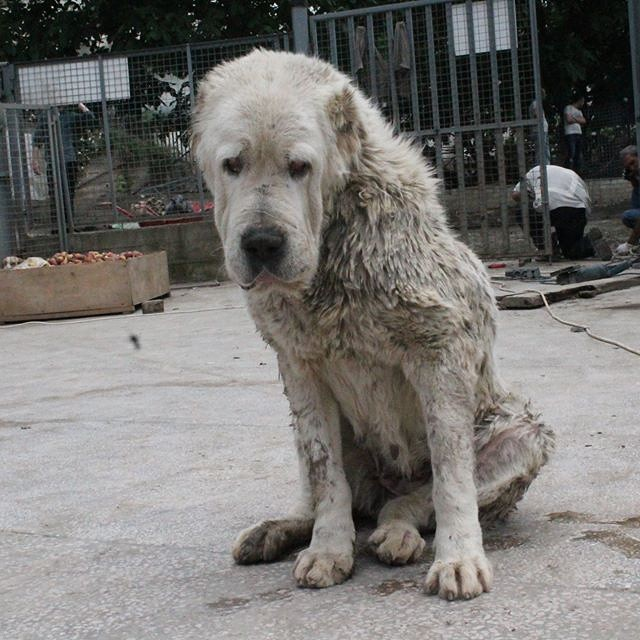 georgia-dog