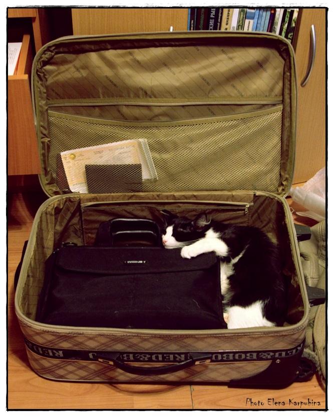 IMG_2738буль в чемодане веб