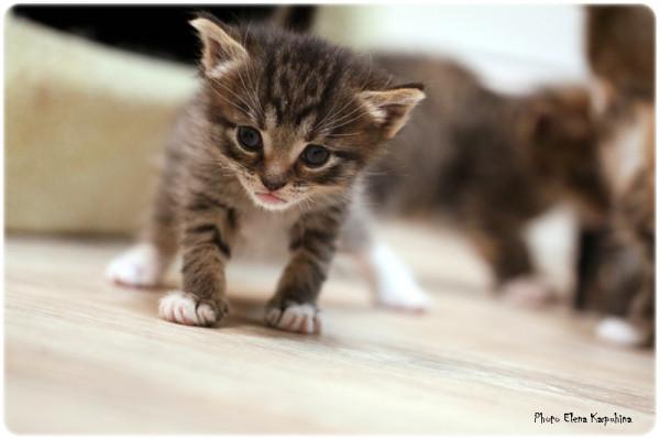IMG_9698 котен веб.JPG