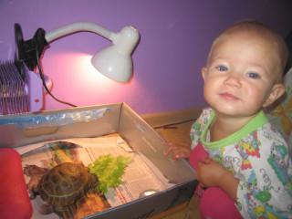 наша Сосиска с черепашкой