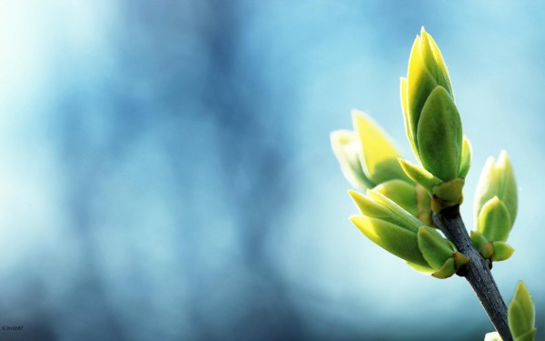 Весна-начало