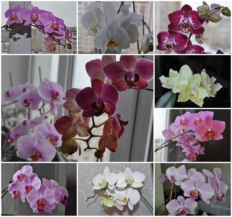 орхидеи общ