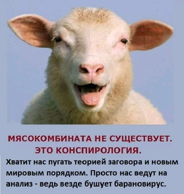 овцебаран.