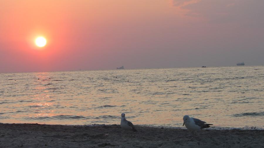 Птички на пляже в Одессе