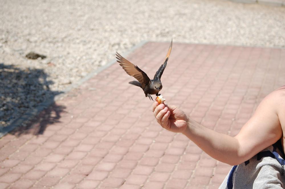Птицы на Мертвом море 20