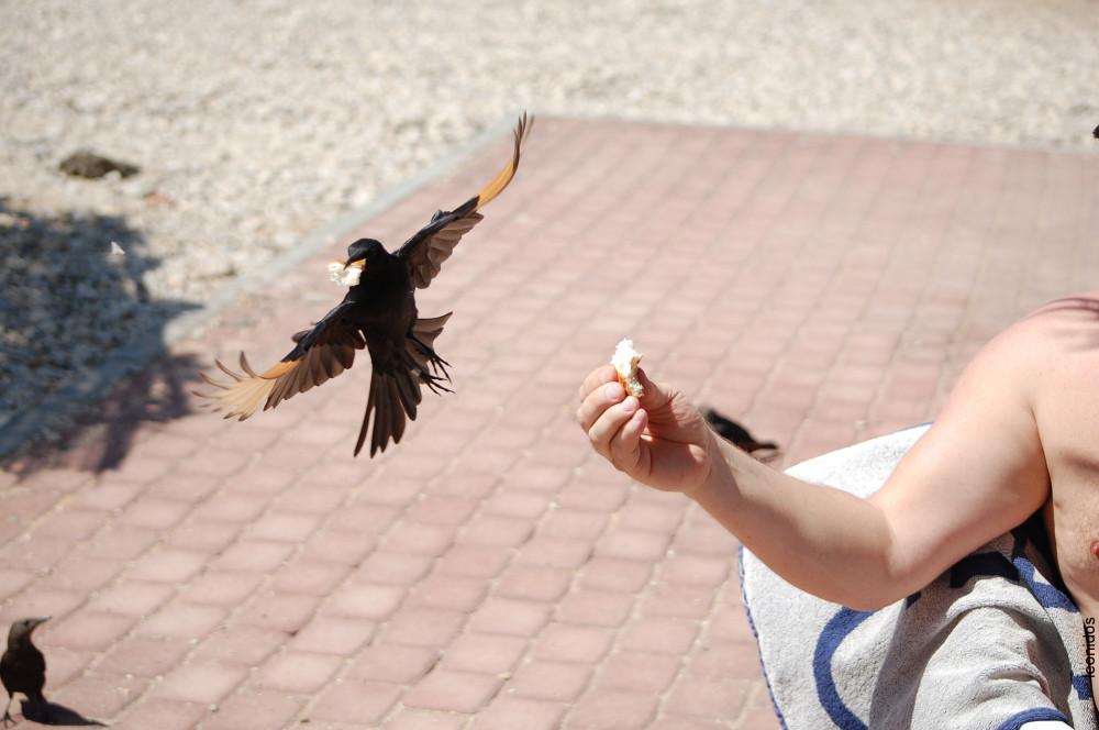 Птицы на Мертвом море