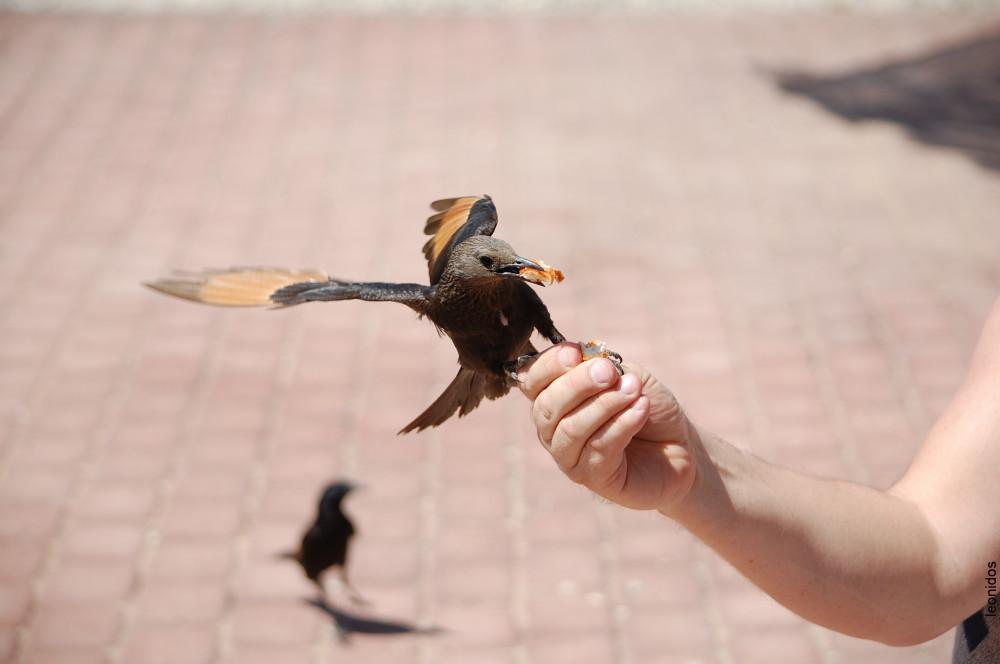 Птицы на Мертвом море 1