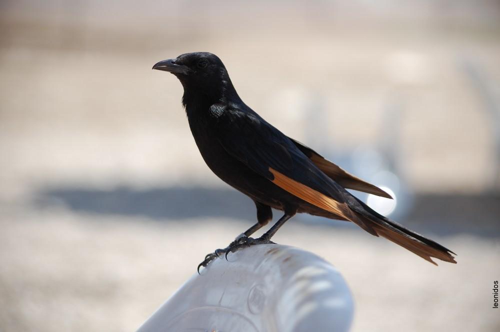 Птицы на Мертвом море 3