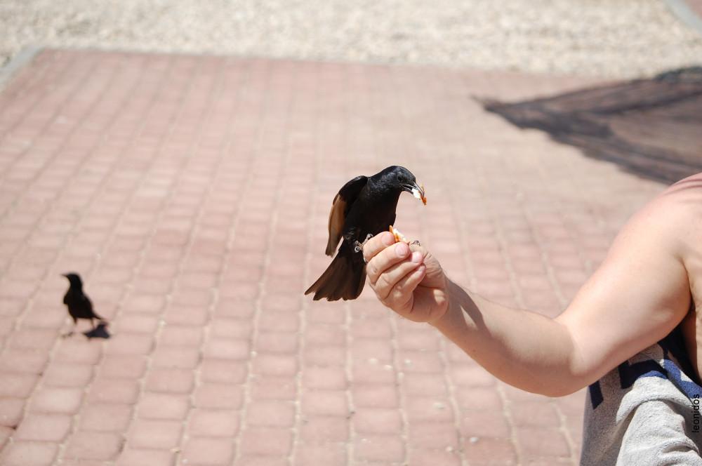 Птицы на Мертвом море 6