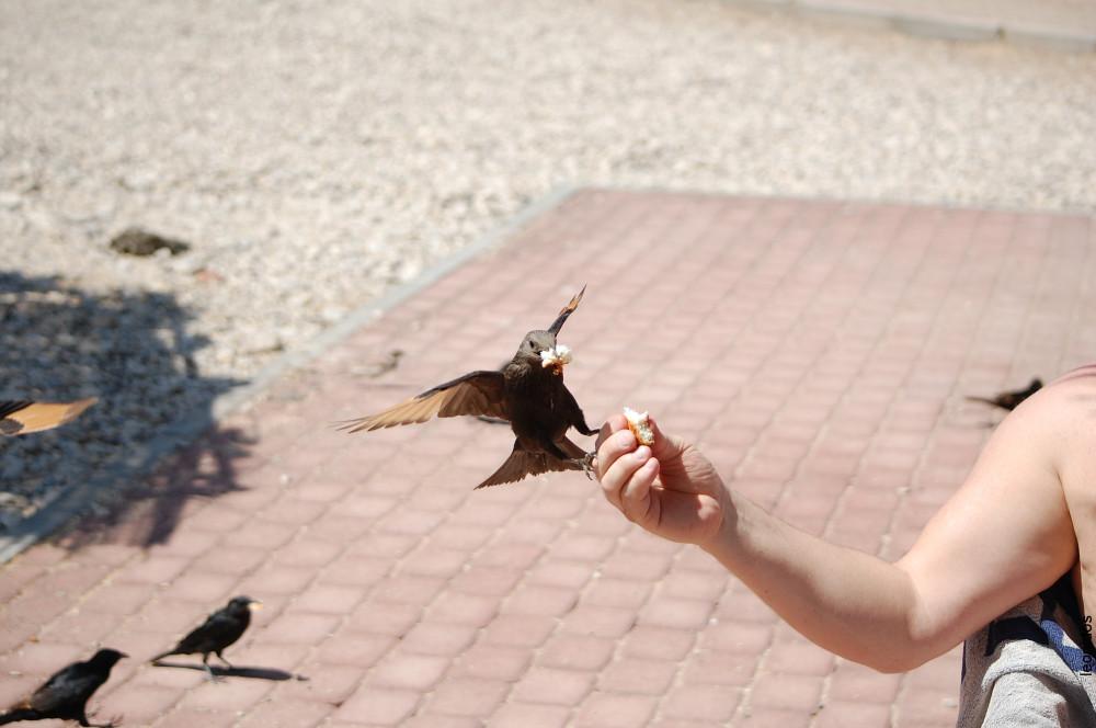 Птицы на Мертвом море 7