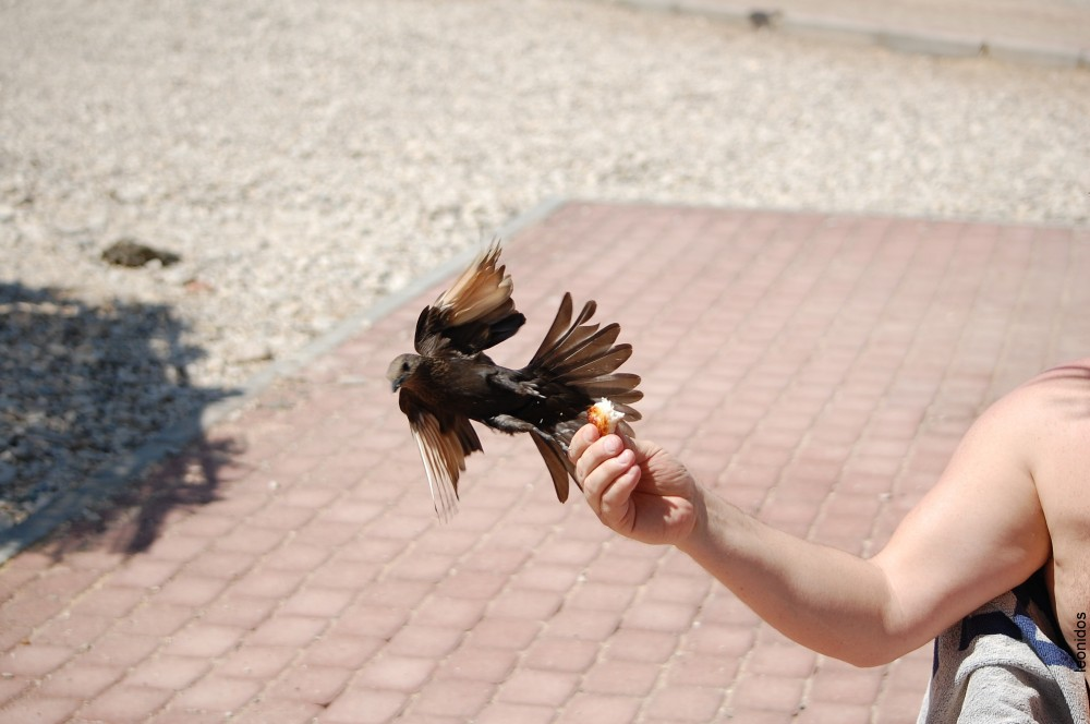 Птицы на Мертвом море 8