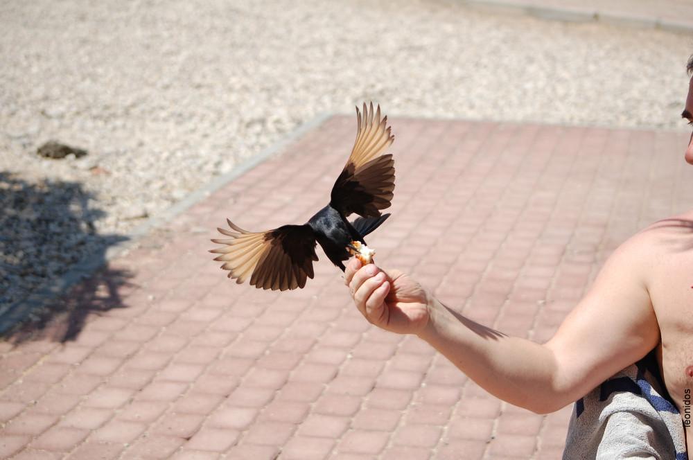 Птицы на Мертвом море 9