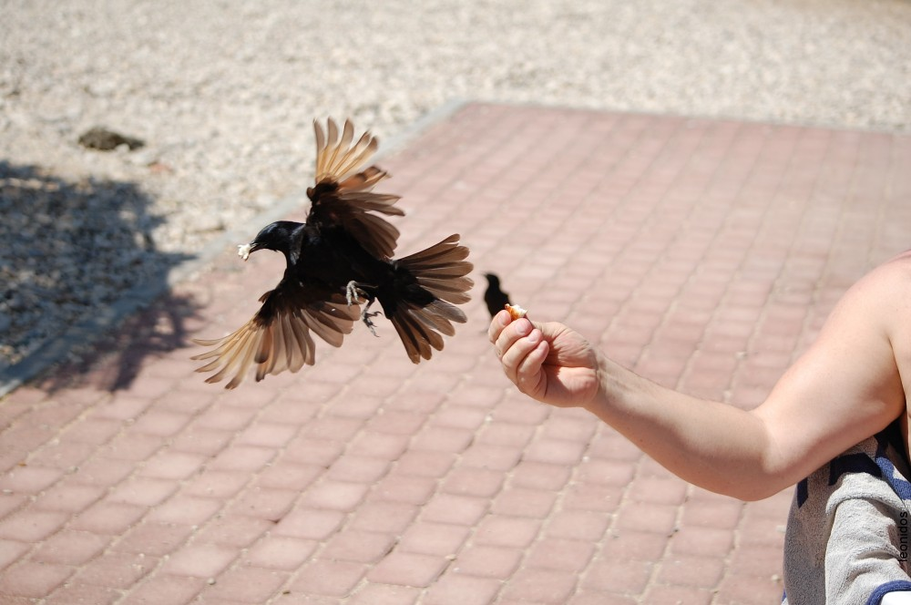 Птицы на Мертвом море 10