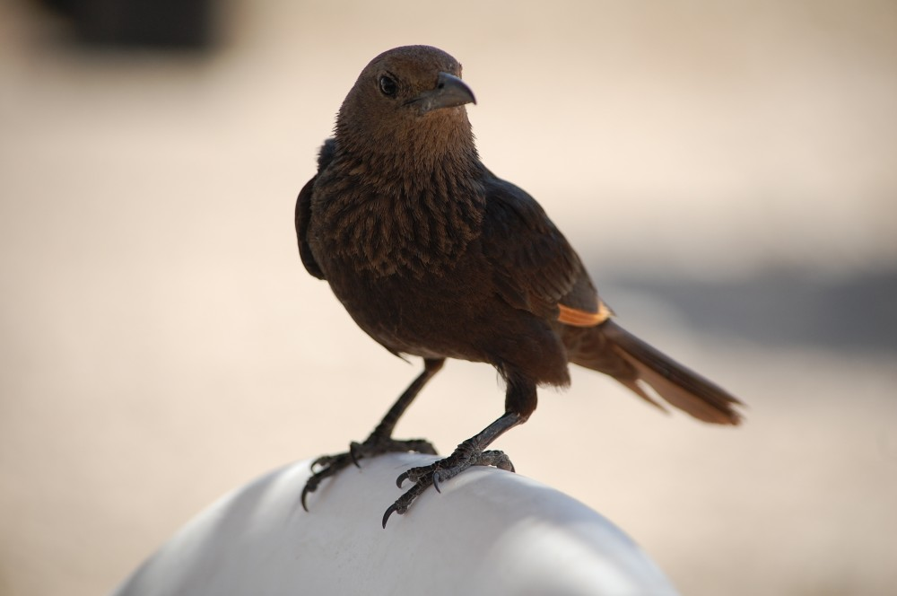 Птицы на Мертвом море 13