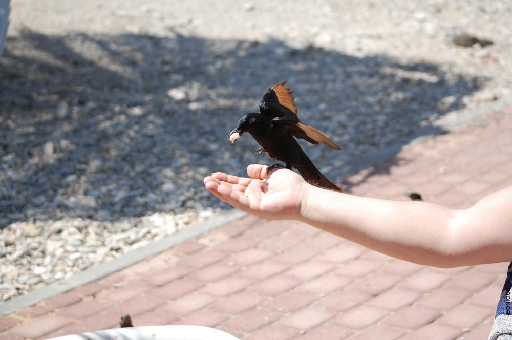 Птицы на Мертвом море 14
