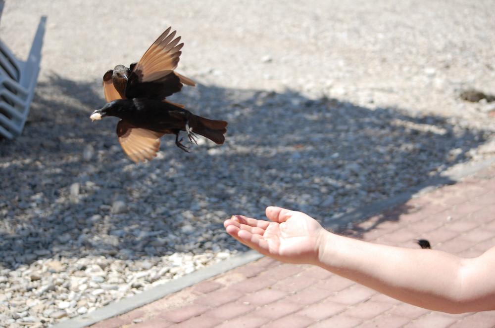 Птицы на Мертвом море 15