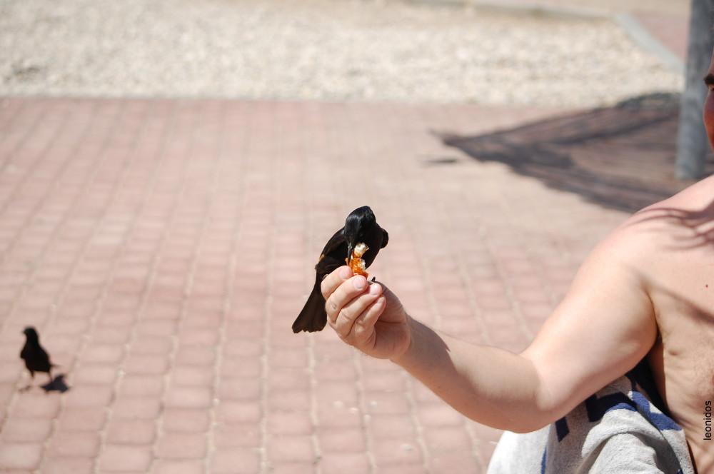Птицы на Мертвом море 19