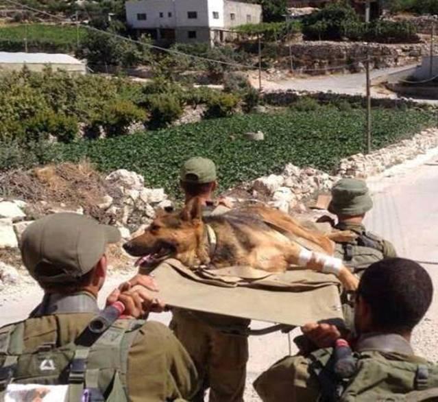 Собаки на войне в Газе 1