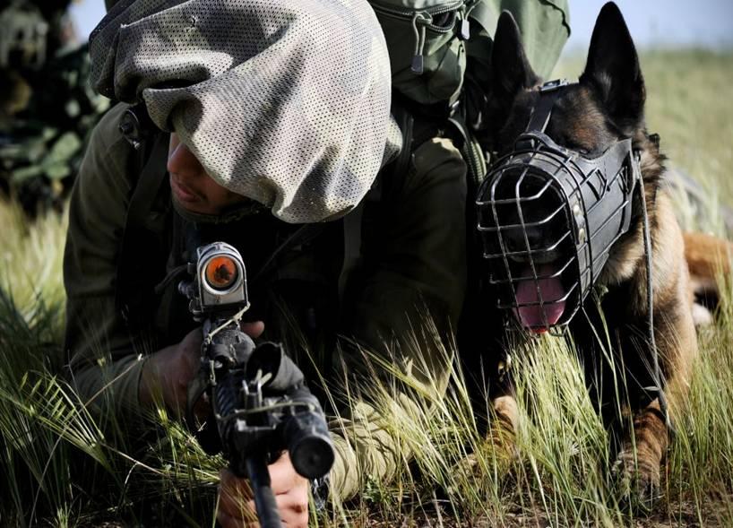 Собаки на войне в Газе 2