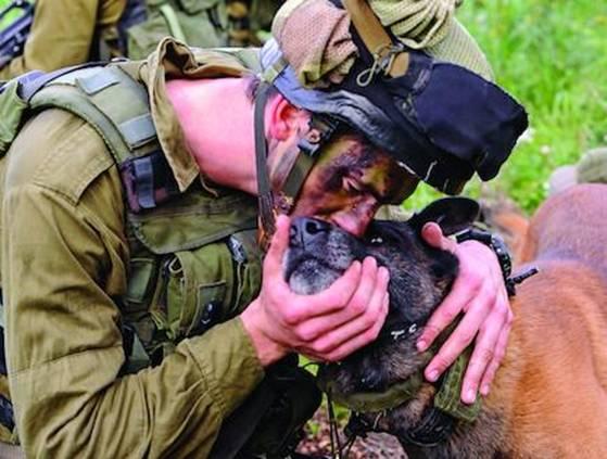 Собаки на войне в Газе 4