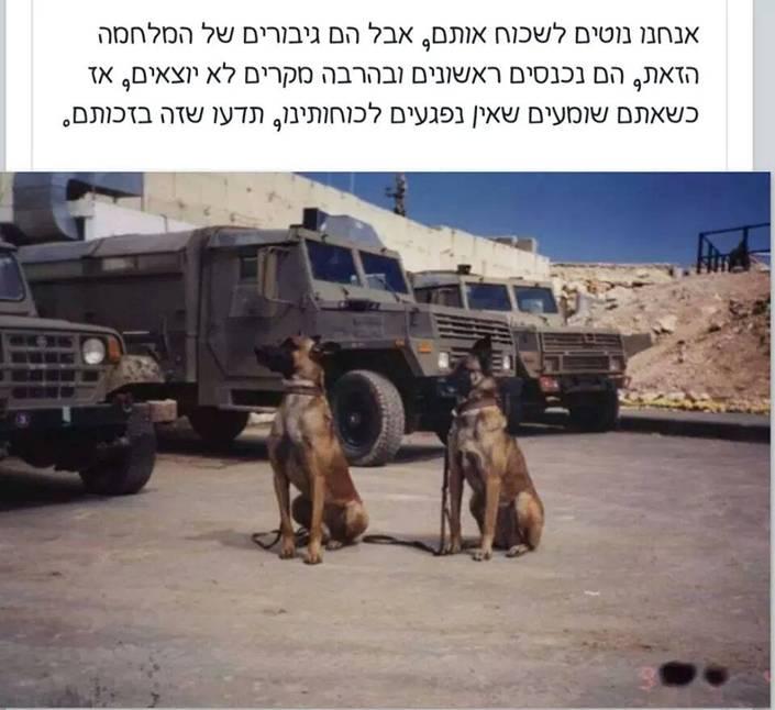 Собаки на войне в Газе