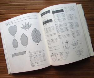 Томоко Иида Интерьерные цветы 5.jpg