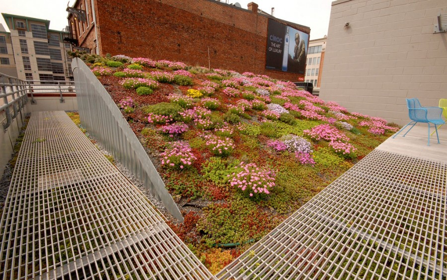 ASLA-Green-Roof-Design-by-Editorial