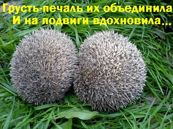 img_18299476_34_0