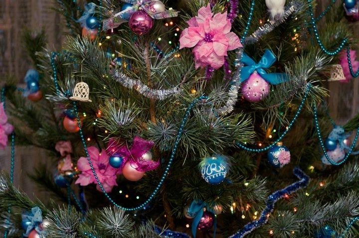 Katya's fir-tree 1