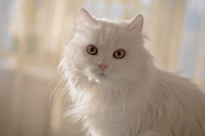 Cat_Kitya