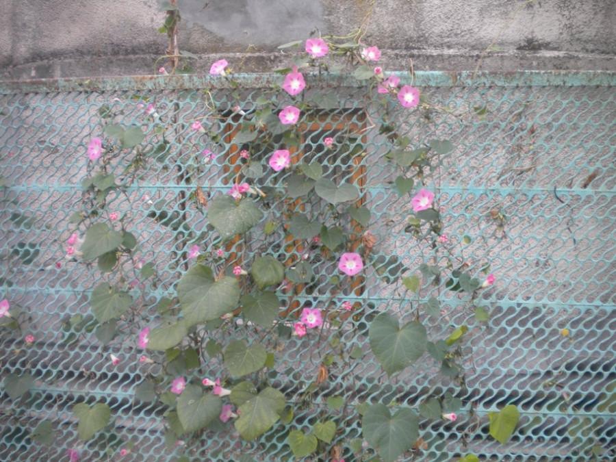 цвету