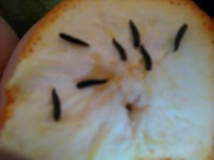 Червячки из апельсина